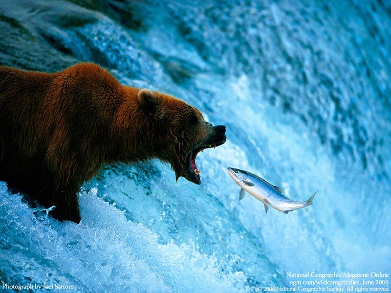 Salmon-714447