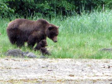 BearcubsKT