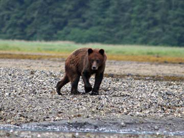 Bearclaws